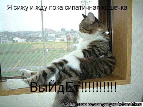 Котоматрица: Я сижу и жду пока сипатичная кошечка  ВыЙдЕт!!!!!!!!!!