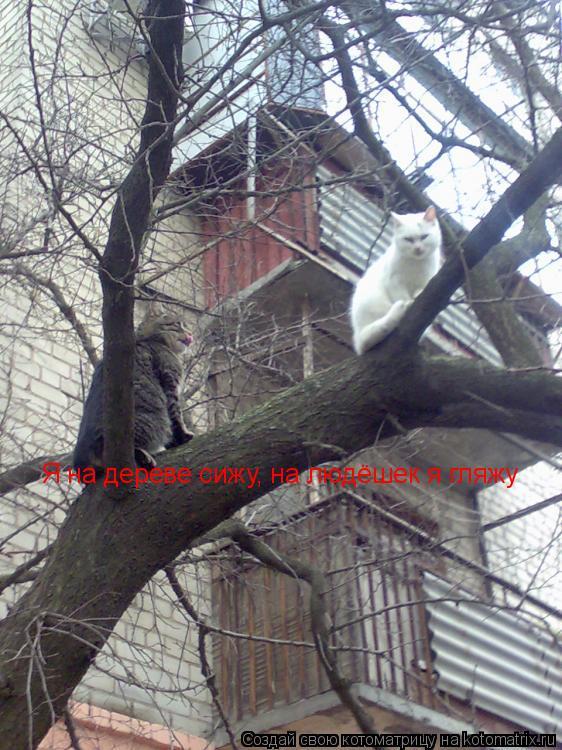 Котоматрица: Я на дереве сижу, на людёшек я гляжу
