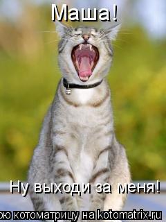 Котоматрица: Маша! Ну выходи за меня!