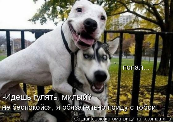Котоматрица: -Идешь гулять, милый? не беспокойся, я обязательно пойду с тобой! попал... . .
