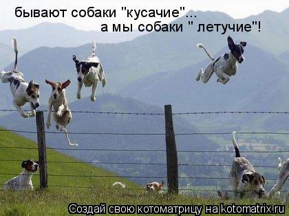 """Котоматрица: бывают собаки """"кусачие""""... а мы собаки """" летучие""""!"""