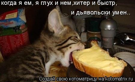 Котоматрица: когда я ем, я глух и нем,хитер и быстр, и дьявольски умен..