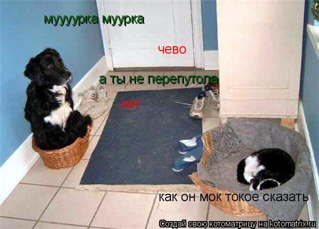 Котоматрица: муууурка муурка   чево а ты не перепутола нет как он мок токое сказать