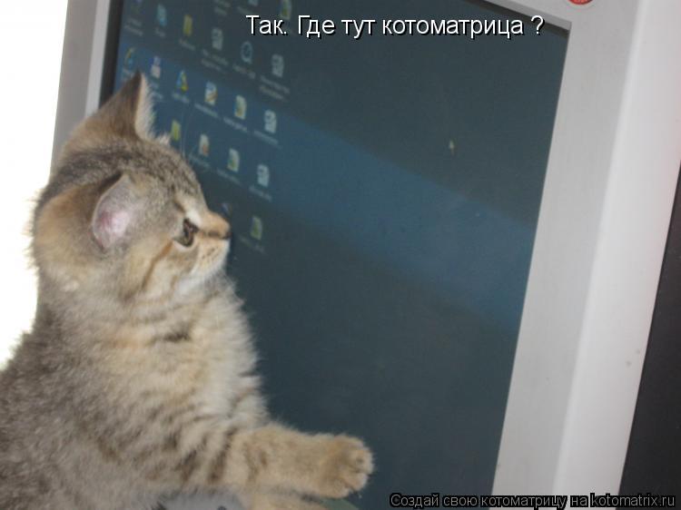 Котоматрица: Так. Где тут котоматрица ?