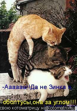Котоматрица: -Аааааа!!Да не Зинка я, оболтусы,она за углом!!!