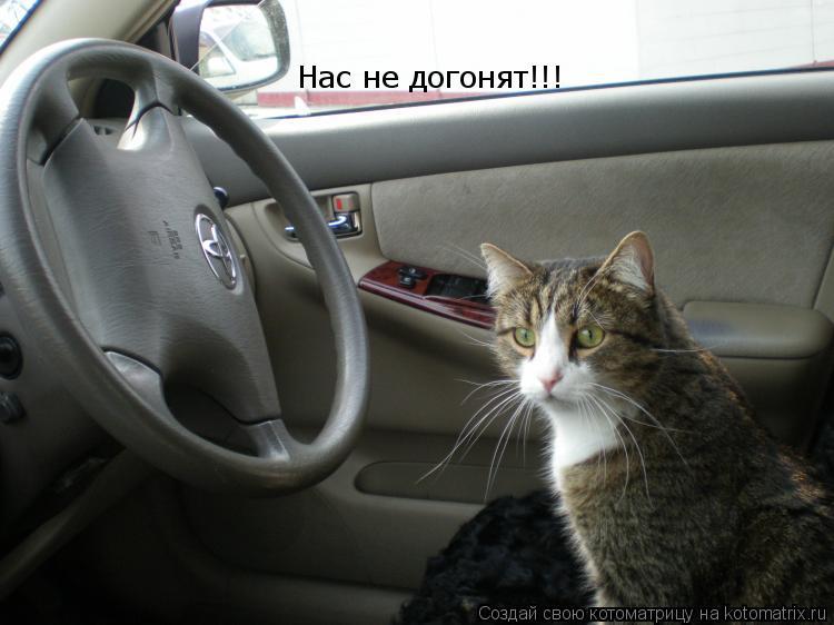 Котоматрица: Нас не догонят!!!