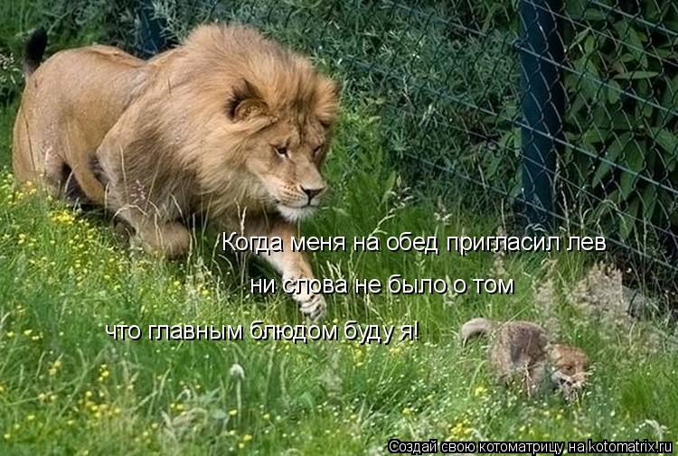 Котоматрица: Когда меня на обед пригласил лев ни слова не было о том что главным блюдом буду я!