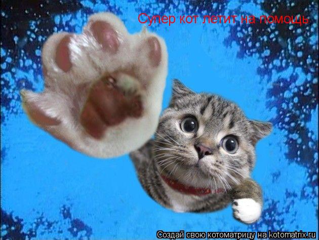 Котоматрица: Супер кот летит на помощь