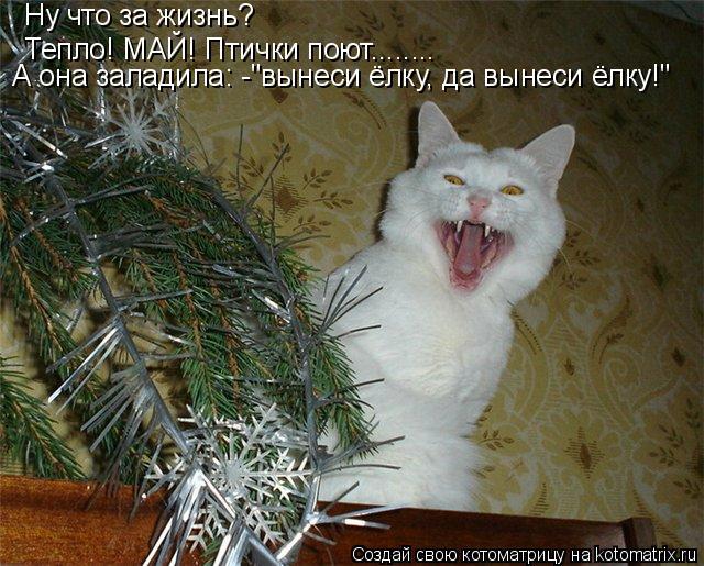 """Котоматрица: Ну что за жизнь? Тепло! МАЙ! Птички поют........ А она заладила: -""""вынеси ёлку, да вынеси ёлку!"""""""