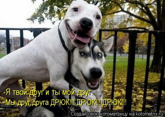 Котоматрица: -Я твой друг и ты мой друг.  -Мы друг друга ДРЮК!!! ДРЮК!!! ДРЮК!!!   .