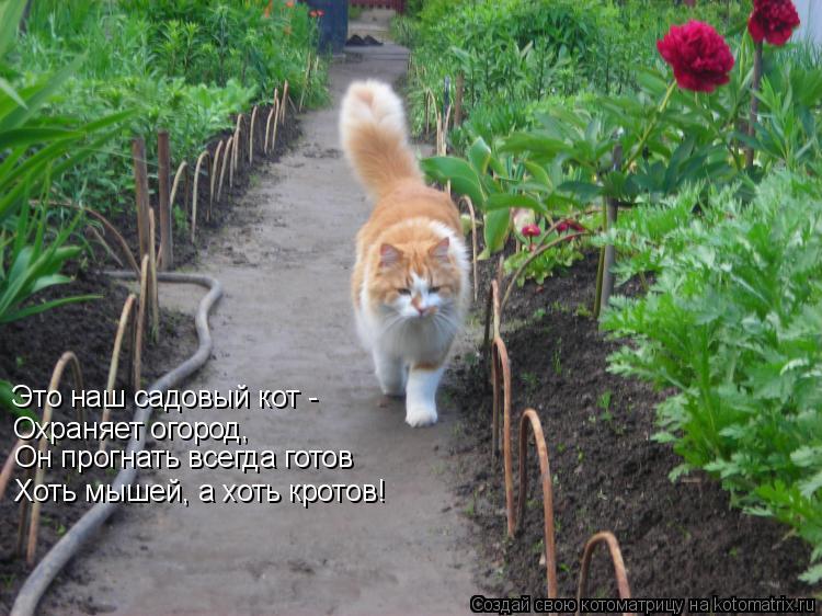Котоматрица: Это наш садовый кот -  Охраняет огород, Он прогнать всегда готов Хоть мышей, а хоть кротов!