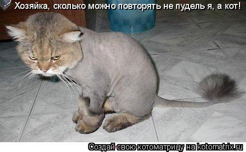 Котоматрица: Хозяйка, сколько можно повторять не пудель я, а кот!