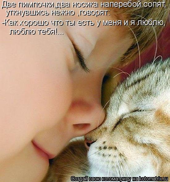 Котоматрица: Две пимпочки,два носика наперебой сопят, уткнувшись нежно ,говорят: -Как хорошо что ты есть у меня и я люблю, люблю тебя!...