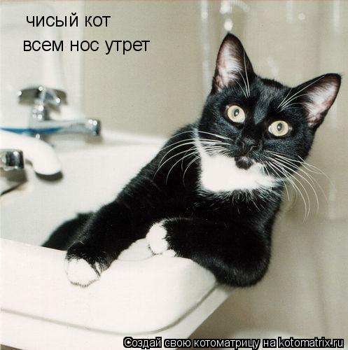 Котоматрица: чисый кот всем нос утрет