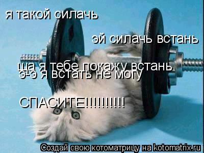 Котоматрица: я такой силачь эй силачь встань ща я тебе покажу встань э-э я встать не могу СПАСИТЕ!!!!!!!!!!