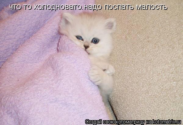 Котоматрица: что то холодновато.надо поспать малость