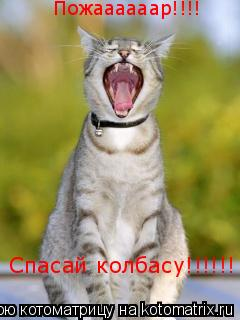 Котоматрица: Пожаааааар!!!! Спасай колбасу!!!!!!