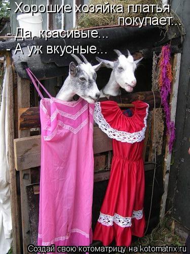 Котоматрица: - Хорошие хозяйка платья  покупает... - Да, красивые... - А уж вкусные...