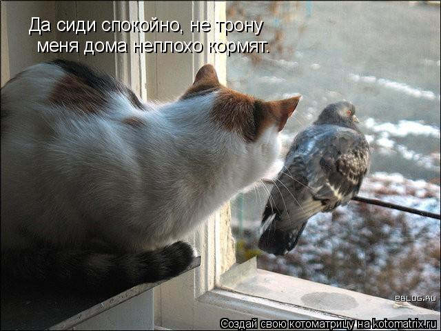 Котоматрица: Да сиди спокойно, не трону меня дома неплохо кормят.