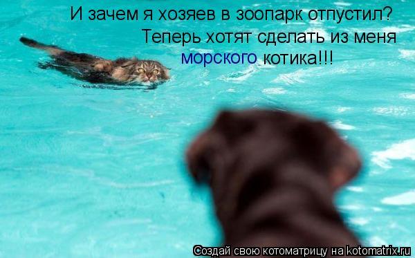 Котоматрица: И зачем я хозяев в зоопарк отпустил? Теперь хотят сделать из меня морского котика!!!
