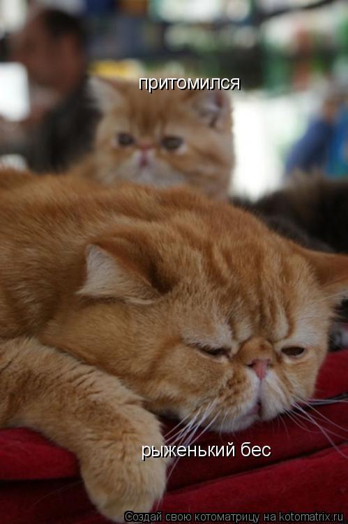 Котоматрица: рыженький бес притомился