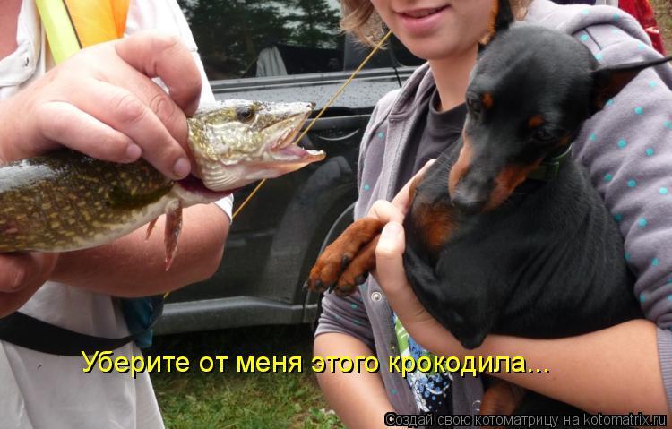 Котоматрица: Уберите от меня этого крокодила...