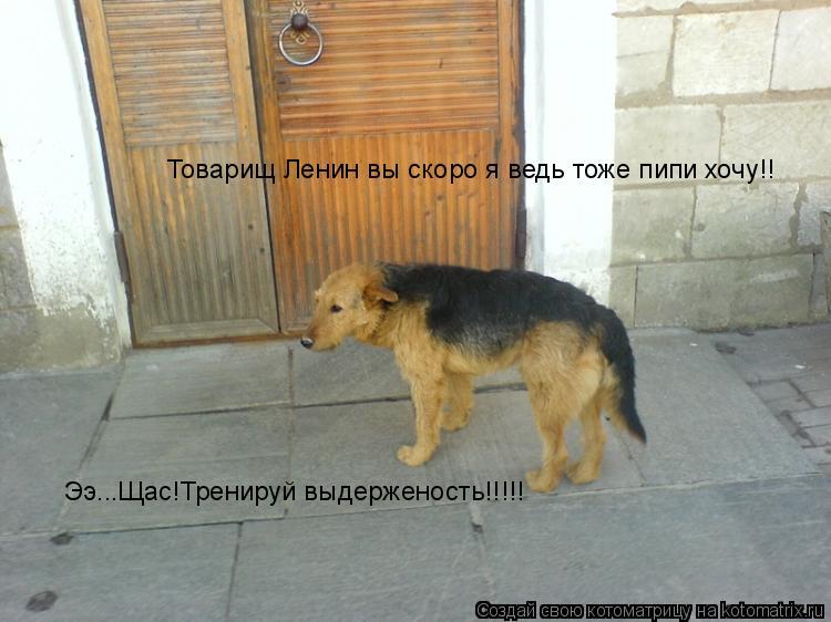 Котоматрица: Товарищ Ленин вы скоро я ведь тоже пипи хочу!! Ээ...Щас!Тренируй выдерженость!!!!!