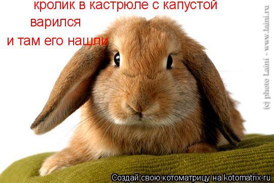 Котоматрица: кролик в кастрюле с капустой варился и там его нашли