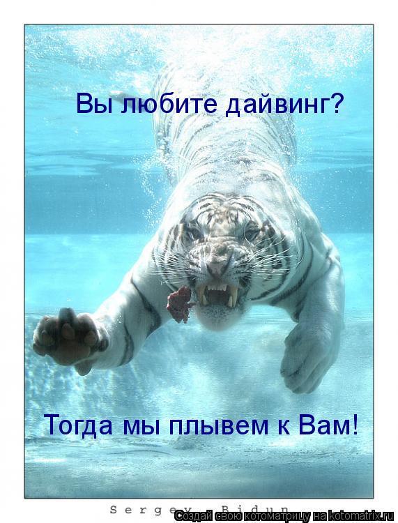 Котоматрица: Вы любите дайвинг? Тогда мы плывем к Вам!