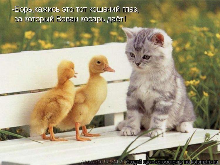 Котоматрица: -Борь,кажись это тот кошачий глаз, за который Вован косарь даёт!
