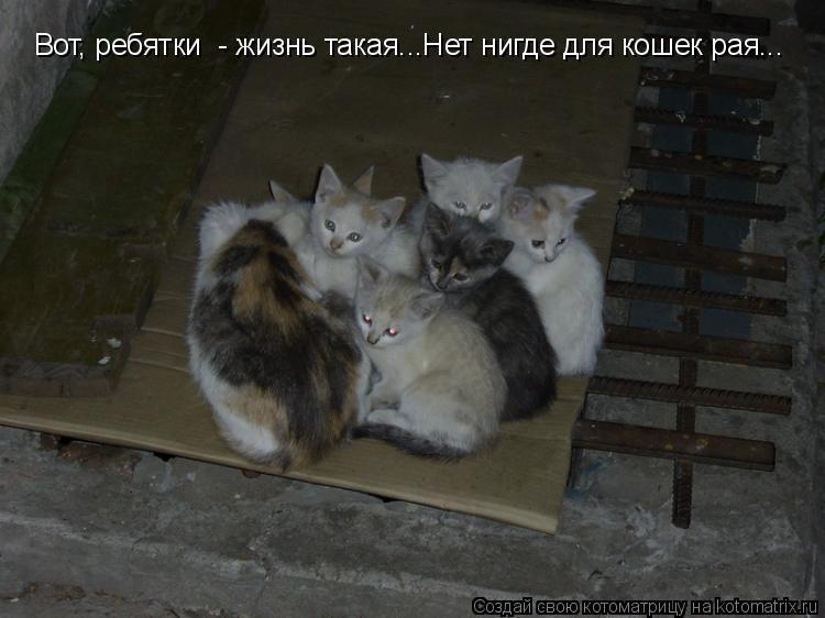 Котоматрица: Вот, ребятки  - жизнь такая...Нет нигде для кошек рая...