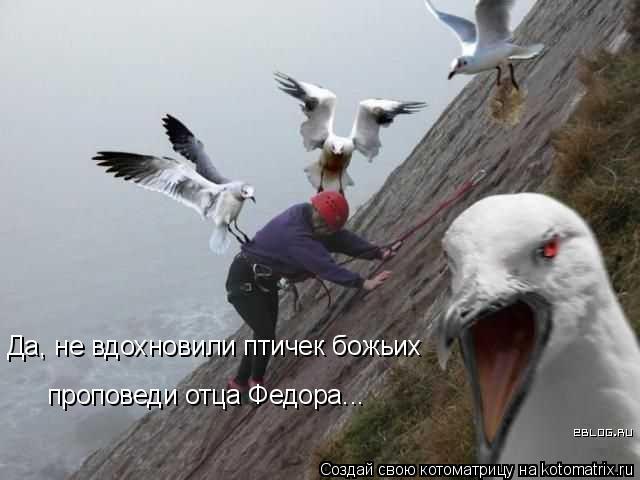 Котоматрица: Да, не вдохновили птичек божьих проповеди отца Федора...