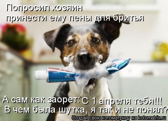 Котоматрица: Попросил хозяин  принести ему пены для бритья А сам как заорет: С 1 апреля тебя!!! В чем была шутка, я так и не понял?