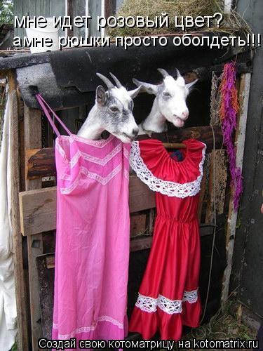 Котоматрица: мне идет розовый цвет?  амне рюшки просто оболдеть!!!