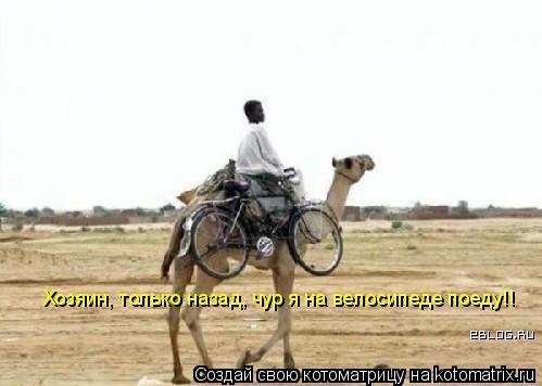 Котоматрица: Хозяин, только назад, чур я на велосипеде поеду!!