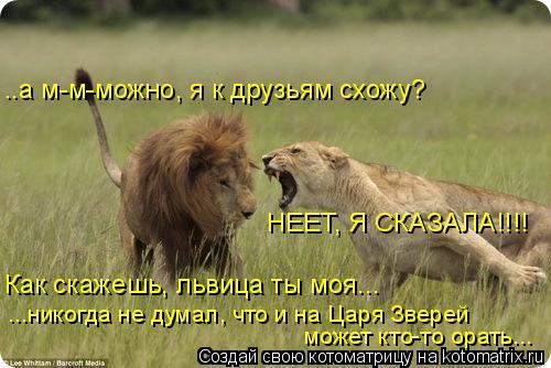 Котоматрица: ..а м-м-можно, я к друзьям схожу? НЕЕТ, Я СКАЗАЛА!!!! Как скажешь, львица ты моя... ...никогда не думал, что и на Царя Зверей  может кто-то орать...