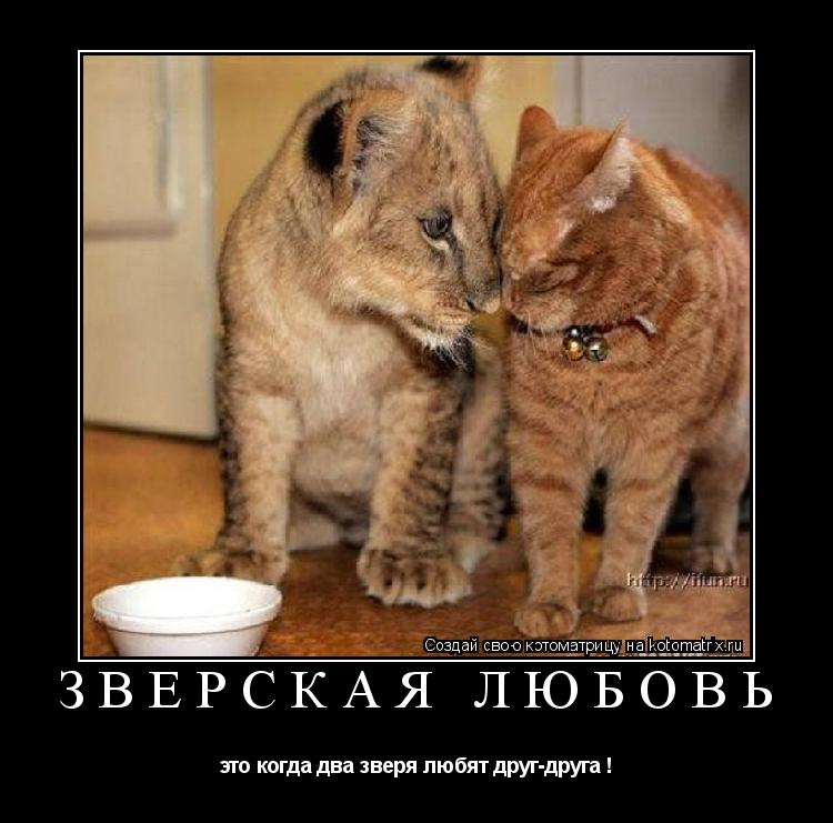 Котоматрица: зверская любовь это когда два зверя любят друг-друга !