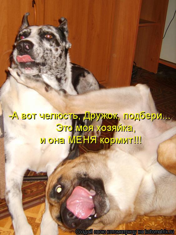 Котоматрица: -А вот челюсть, Дружок, подбери... Это моя хозяйка,  и она МЕНЯ кормит!!!