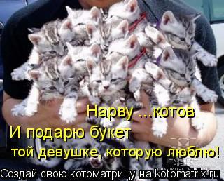 Котоматрица: той девушке, которую люблю! И подарю букет Нарву ...котов