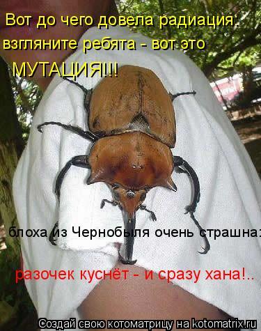 Котоматрица: Вот до чего довела радиация: взгляните ребята - вот это  МУТАЦИЯ!!! блоха из Чернобыля очень страшна: разочек куснёт - и сразу хана!..