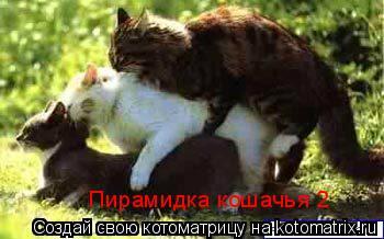 Котоматрица: Пирамидка кошачья 2