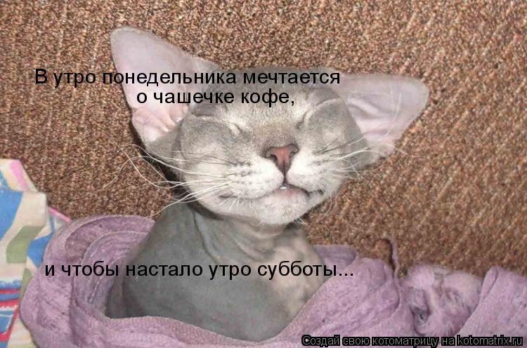 Котоматрица: В утро понедельника мечтается   о чашечке кофе, и чтобы настало утро субботы...