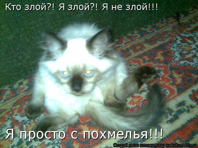 Котоматрица: Кто злой?! Я злой?! Я не злой!!! Я просто с похмелья!!!