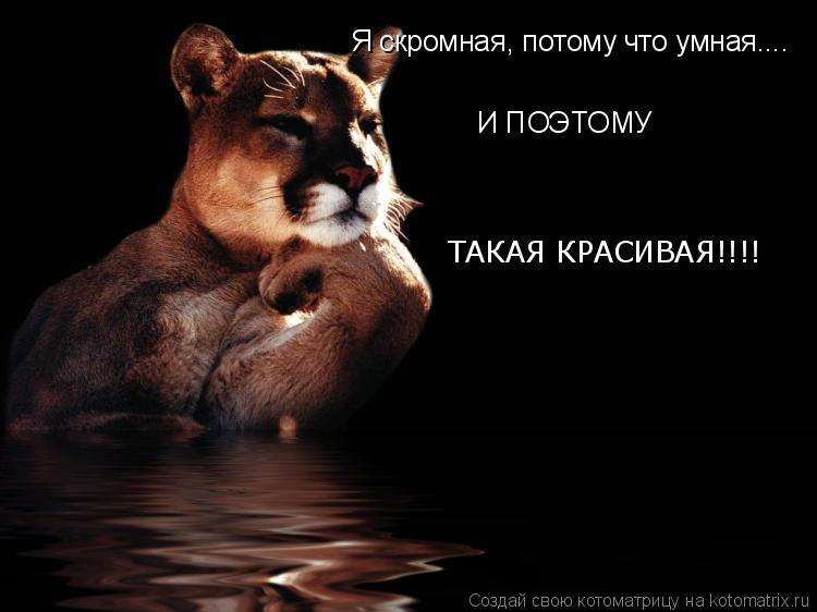 Котоматрица: Я скромная, потому что умная....  И   И ПОЭТОМУ ТАКАЯ КРАСИВАЯ!!!!