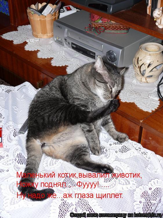 Котоматрица: Маленький котик,вывалил животик, Ножку поднял.....Фуууу!..... Ну надо же...аж глаза щиплет.