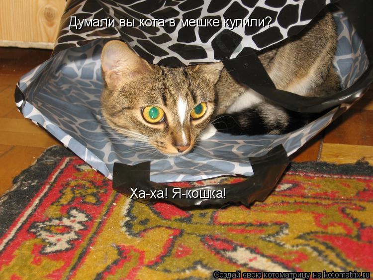 Котоматрица: Думали вы кота в мешке купили? Ха-ха! Я-кошка!