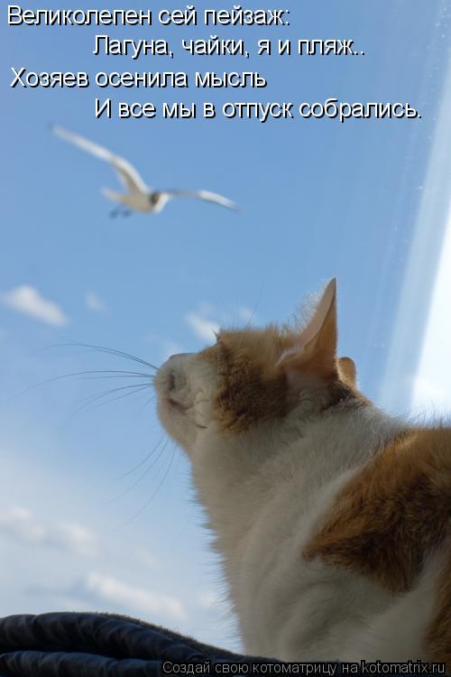 Котоматрица: Великолепен сей пейзаж: Лагуна, чайки, я и пляж.. Хозяев осенила мысль И все мы в отпуск собрались.