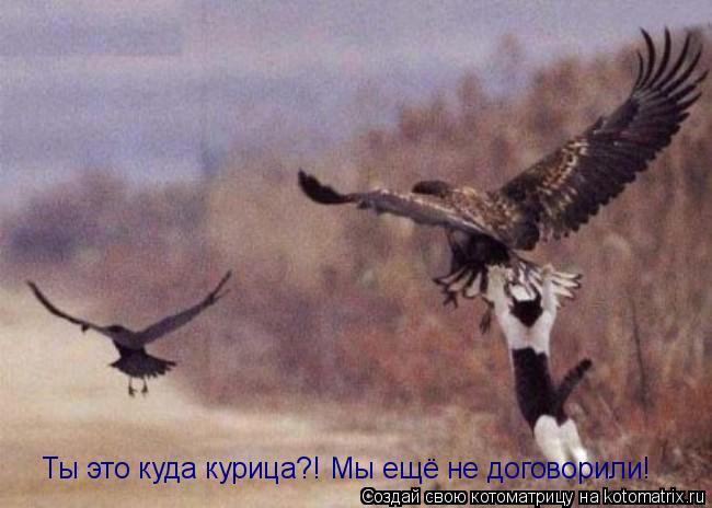Котоматрица: Ты это куда курица?! Мы ещё не договорили!