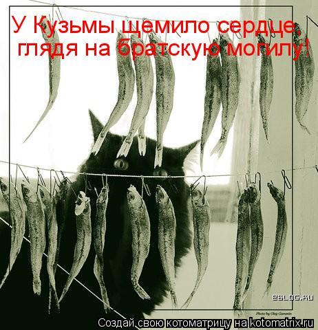 Котоматрица: У Кузьмы щемило сердце, глядя на братскую могилу!