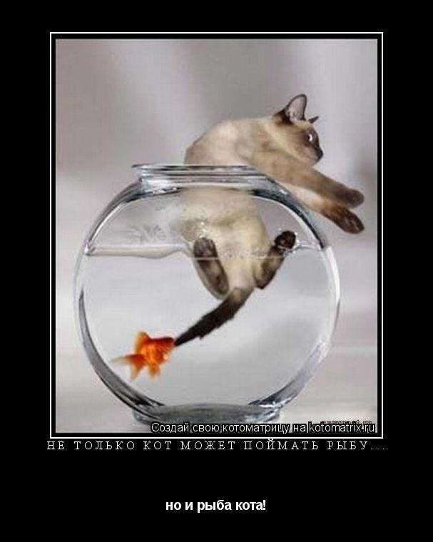 Котоматрица: Не только кот может поймать рыбу... но и рыба кота!